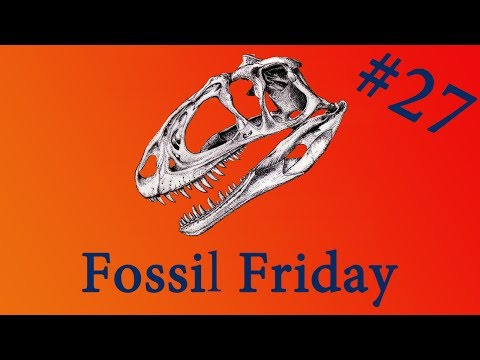 Fossilised Snake That Was Eating Baby Dinosaurs - Fossil Friday