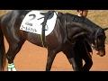 ハットトリック産駒・ゴールドハットのパドック。現地映像、京都競馬場