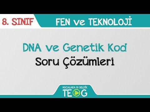 DNA ve Genetik Kod - Soru Çözümleri