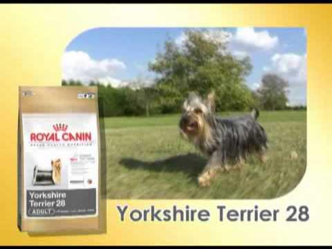 royal canin yorkshire terrier film youtube. Black Bedroom Furniture Sets. Home Design Ideas