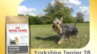Royal Canin Yorkshire Terrier Film