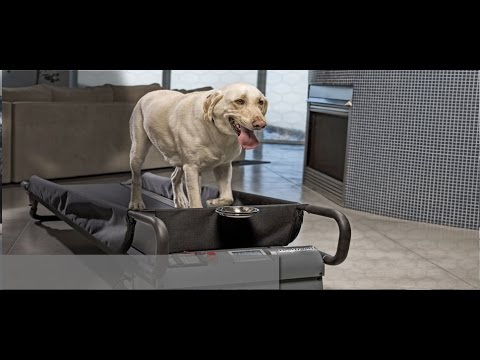 Funny Animals - Funny Dogs Video - Dogs On Treadmill - Funny Dogs Video Compilation 2016