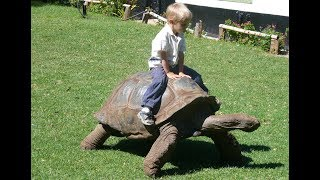 Cute Babies and Tortoise become friends -  Funny Babies and Pets Compilation