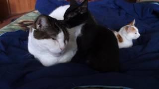Мой Винни и котята-найденыши. Малышкам примерно по два месяца и они ищут добрые ручки!