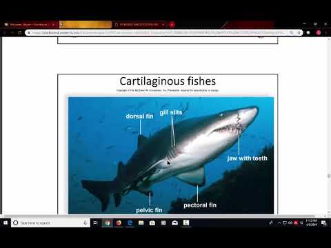 Video Lecture Chordates And Vertebrates