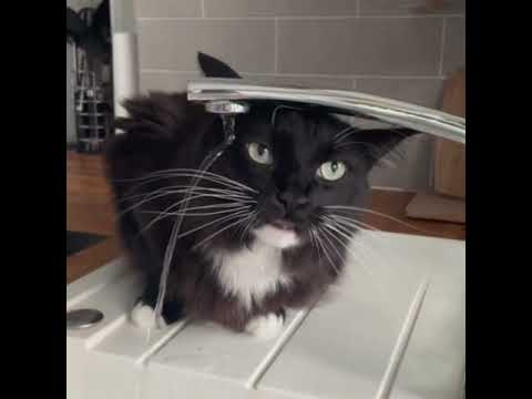 Cat Tries to Drink From Tap Water but Fails and Licks the Air