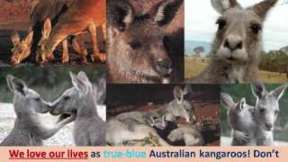 Kangaroo Massacres in Australia #1 Googong Dam Sanctuary Denied.wmv