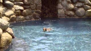 Weimaraner Jumping Into Pool Doo Wop Northern Soul
