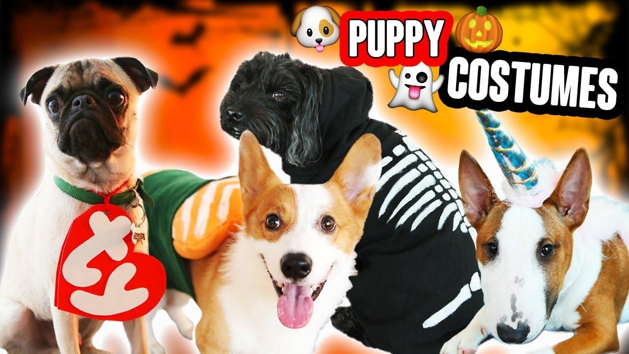 DIY DOG & PET COSTUMES (CUTE!!!!!) - YouTube