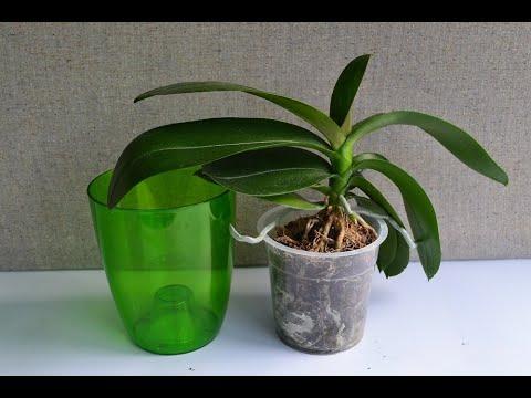 Прозрачные горшки для орхидей: зачем они нужны и какие задачи решают, плюсы и минусы таких изделий