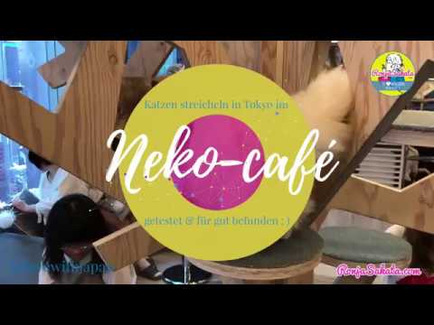 Katzen Café in