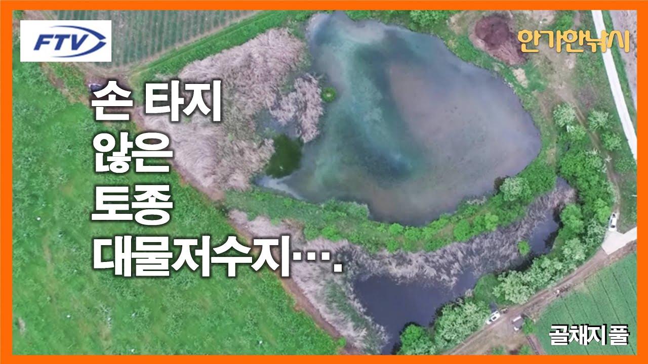 [FTV 한가한낚시] 대물붕어 손 타지 않은 곳의 대물 저수지 - 마릿수 대물 붕어는 바로 이곳