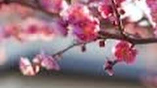 飯田圭織 モー娘結成メンバー福田明日香の結婚&妊娠に「乾杯!」 スポ...