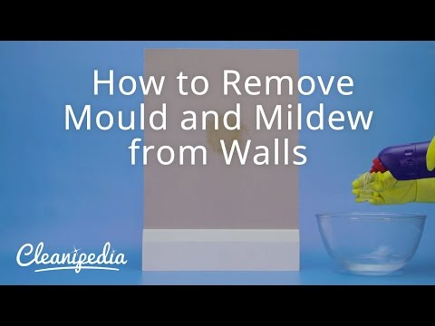 How To Get Rid Of Mold From Youtube Free Mp3 Music Download