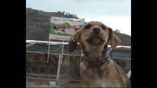 Приют для Собак город Сочи