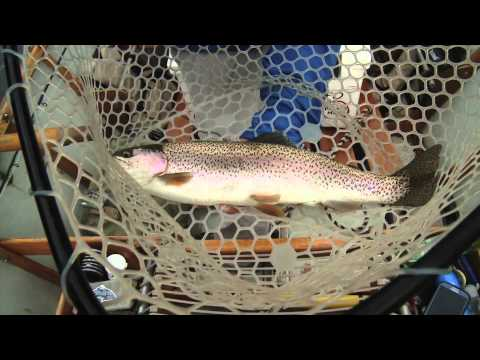 Cumberland Tailwater Trout