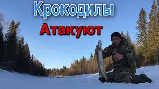 Неуспеваю заряжать ЖЕРЛИЦЫ Попал на жор КРУПНОЙ щуки Рыбалка на жерлицы в марте