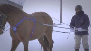 Cheval Canadien (Ski joering)