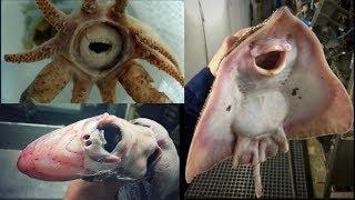 Bizarre Kreaturen Aus Der Tiefsee