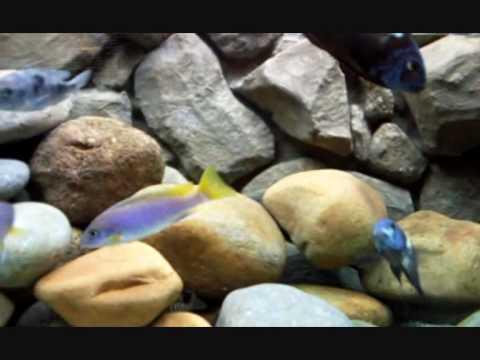 how to make 3d background for aquarium