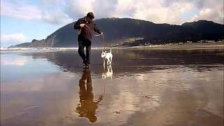 Kennel Calypso's Miniature Bull Terrier Doji & Tai Training On The Beach.wmv