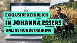 Online Hundeschule Erfahrungen - Exklusiver Einblick in Johanna Essers Kurs