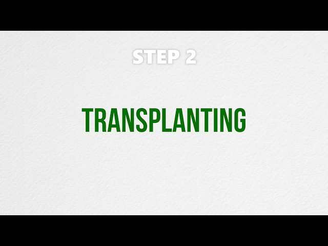 Grow with Us - Transplanting