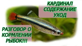 Кардинал, аквариумная рыба, содержание, уход, разговор о кормление аквариумных рыбок!