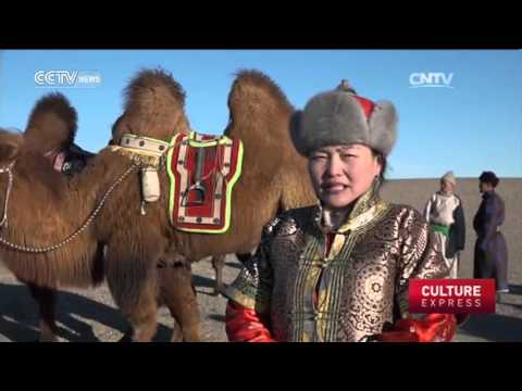 Mongolia Camel Festival: A bid to preserve nomadic culture