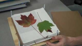 NC Science Olympiad: Preserving Leaves and Flowers