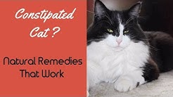hqdefault - Constipation In Diabetic Cats