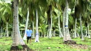 Dokumentation - Das Bikini Atoll