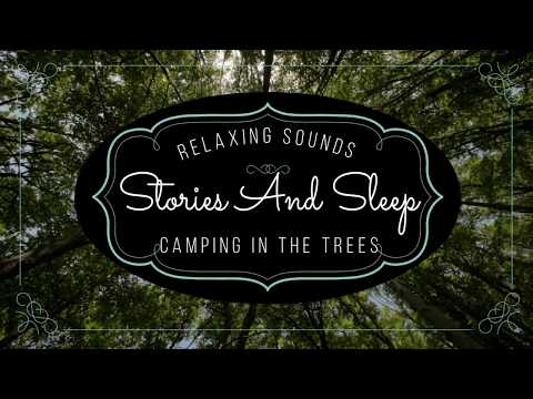Background Noise the Relaxing Sound of Camping in the Trees High Quality Audio
