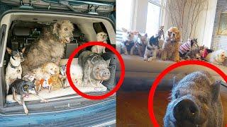 10 старых и больных собак из приюта