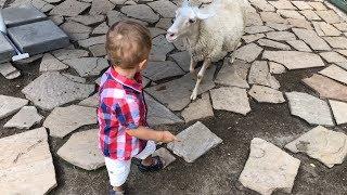 Contact Zoo Children feed animals. Контактный зоопарк. Дети кормят животных