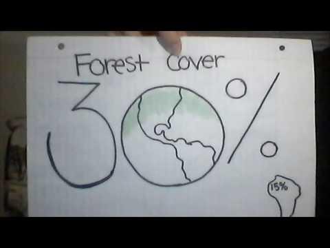Deforestation: Amazon Rainforest (BIO 1233-001)