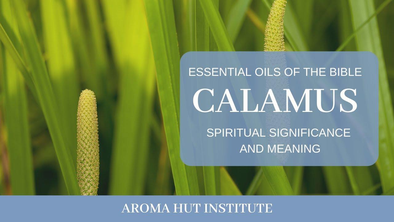 Calamus és körömvirág a látás javítása érdekében - Calamus recept a látás javítása érdekében
