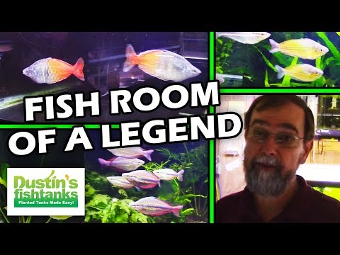 Legend Mr. Gary Lange's Fish Tank Room Tour - Setting up a fish room