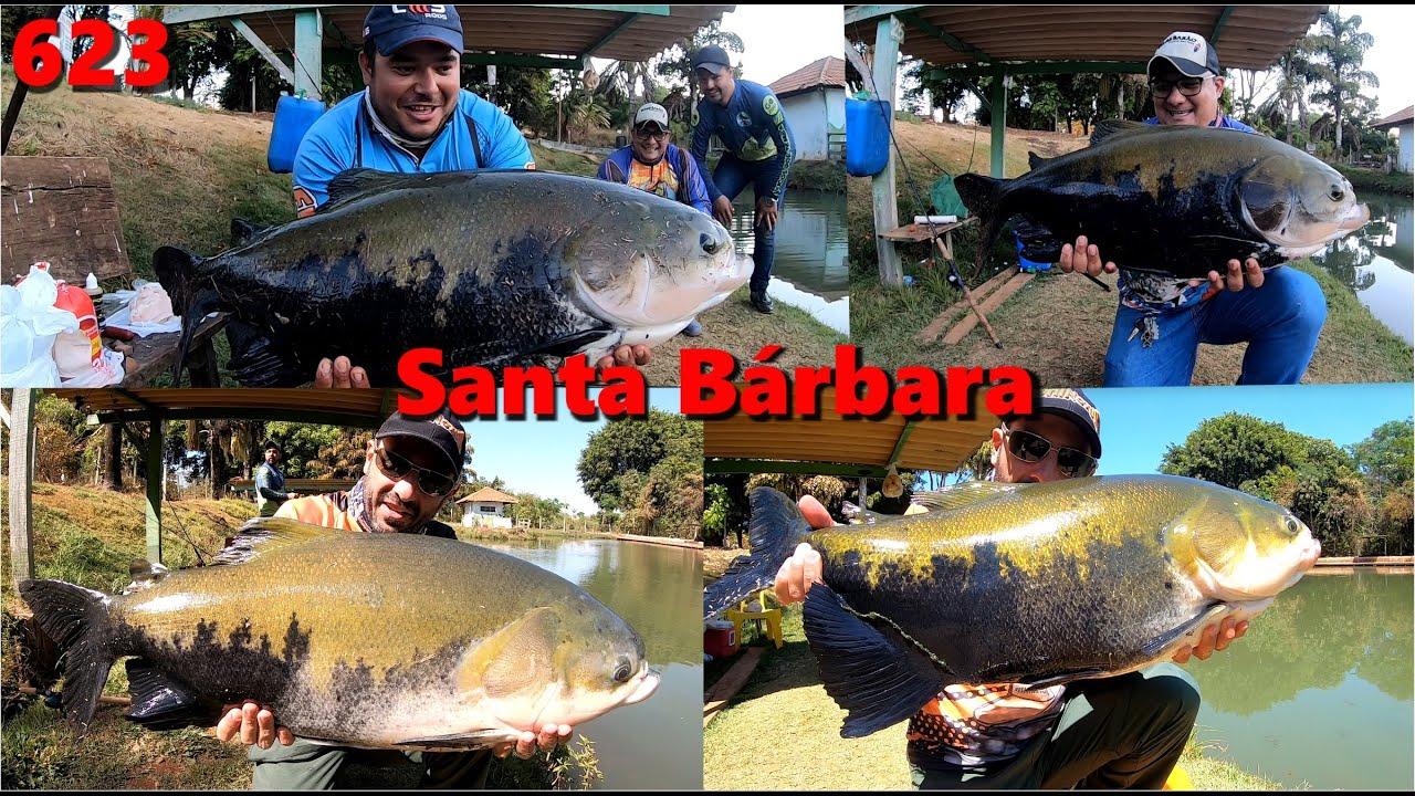Dia difícil com muitos VERDES na ponta da linha no Sta. Bárbara - Fishingtur Pesca 623
