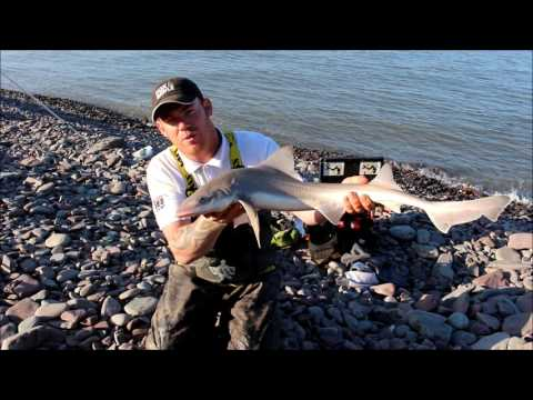 Fishing For Smooth Hound And Thornback Ray In The Bristol Channel