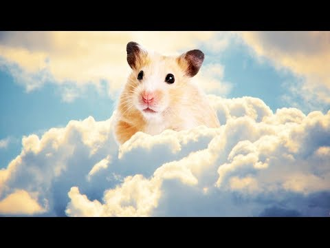 HAMMOND GOD - Overwatch