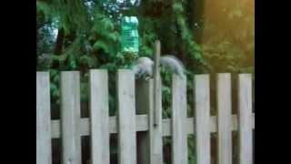 Squirrel And Pop Bottle Feeder 2012