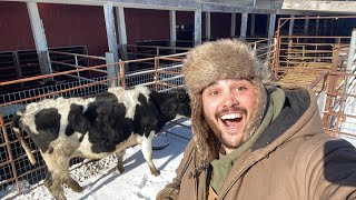 buying-animals-at-the-auction-live-help-pick-new-farm-animals