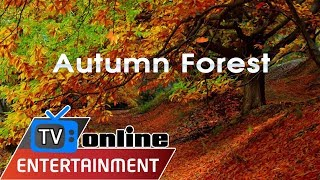 Autumn Forest Hd - Relaxing Nature Video - Nature Sounds