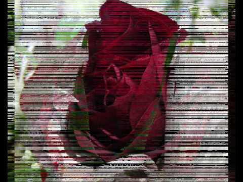 Часть№2.Уличные розы.1 Бордовые розы.