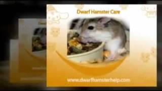Dwarf Hamster Care Thumbnail