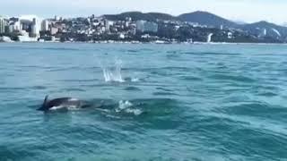 Шоу дельфинов в открытом море для отдыхающих в Сочи