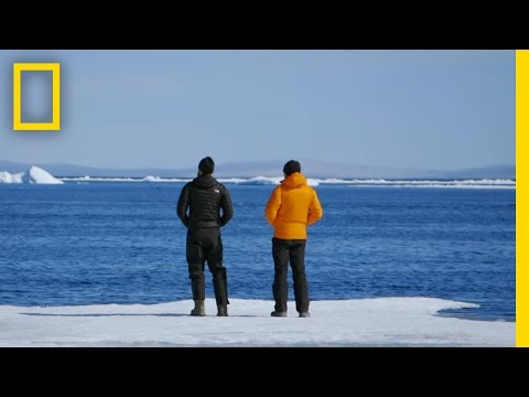 5 Things to Know About the Warming Arctic | Before the Flood