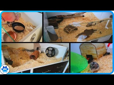 Cleaning 2 Of My Hamsters Cages + Updates | JohnsAnimals