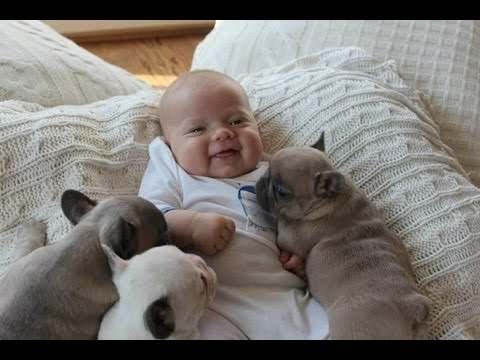 Cute Puppies Dogs Compilation 2015 – Dog Videos 2015 – Cute Puppies Doing Funny Things